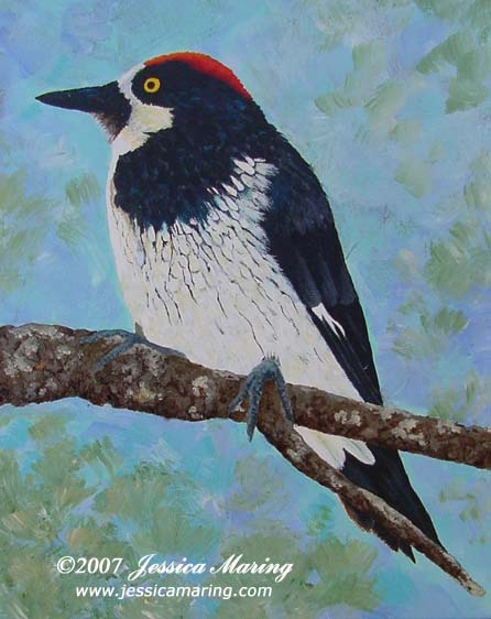 The Acorn Woodpecker, a painting by Jessica Maring