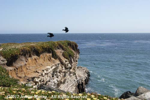 California coast, Santa Cruz, 2012-05-27-02