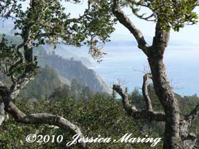 View of Big Sur coastline from Nepenthe; photo by Jessica Maring, Feb 2010